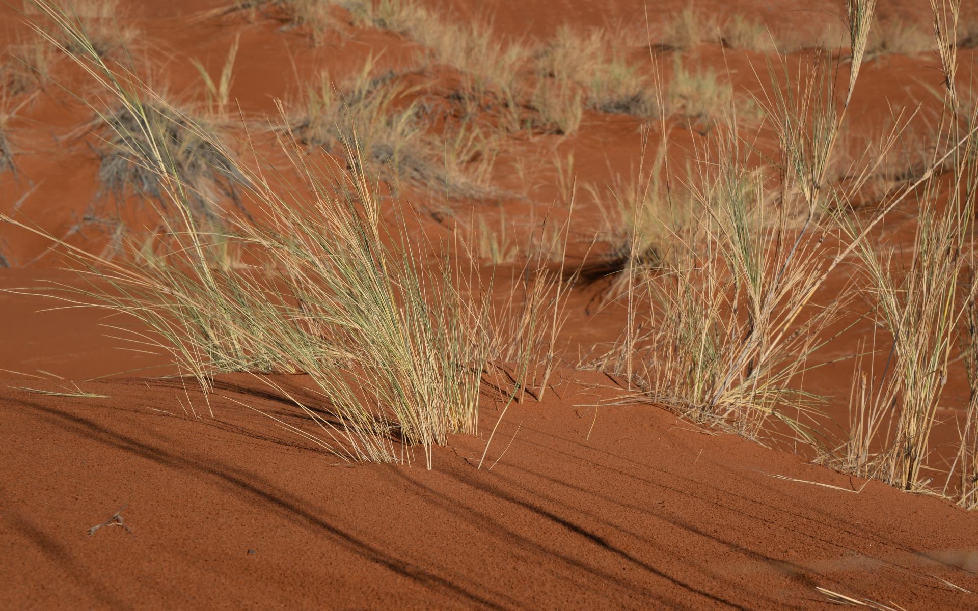 Namibia_Sossusvlei_Deadvlei_06