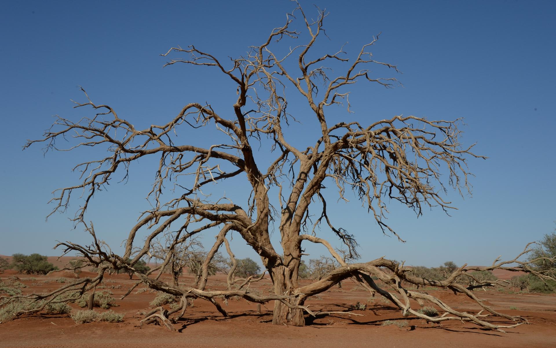 Namibia_Sossusvlei_Deadvlei_08