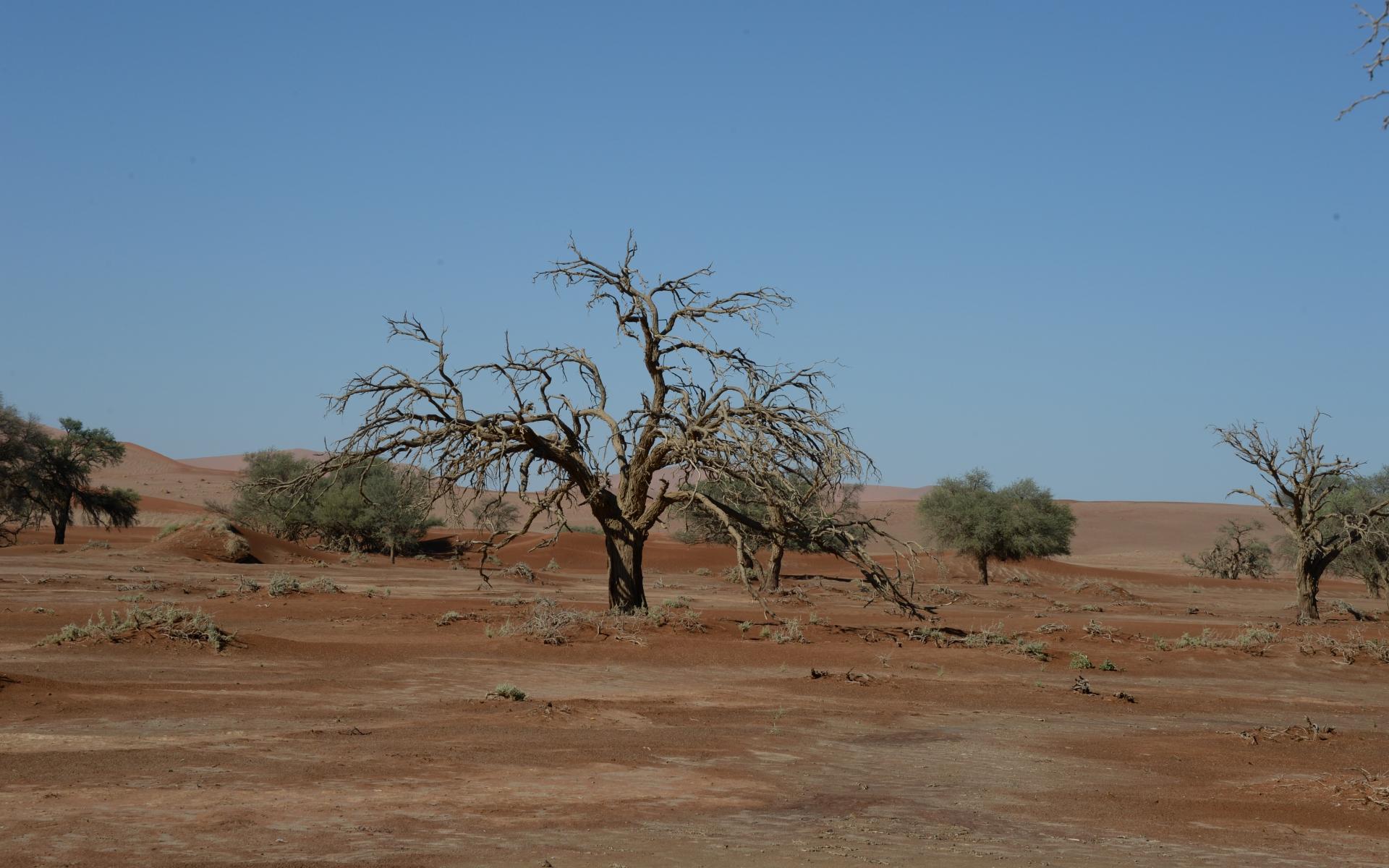 Namibia_Sossusvlei_Deadvlei_09