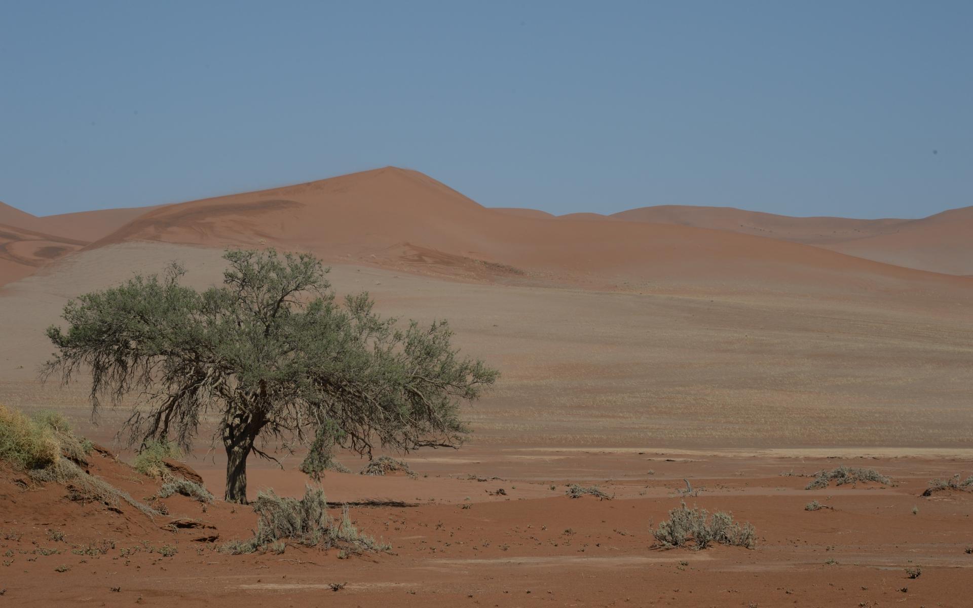 Namibia_Sossusvlei_Deadvlei_11