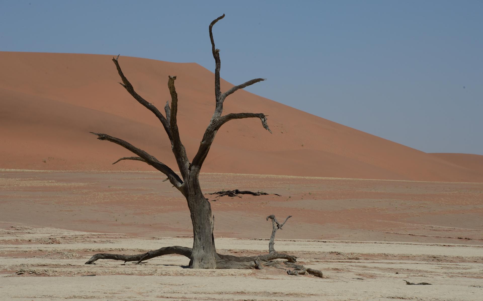 Namibia_Sossusvlei_Deadvlei_22