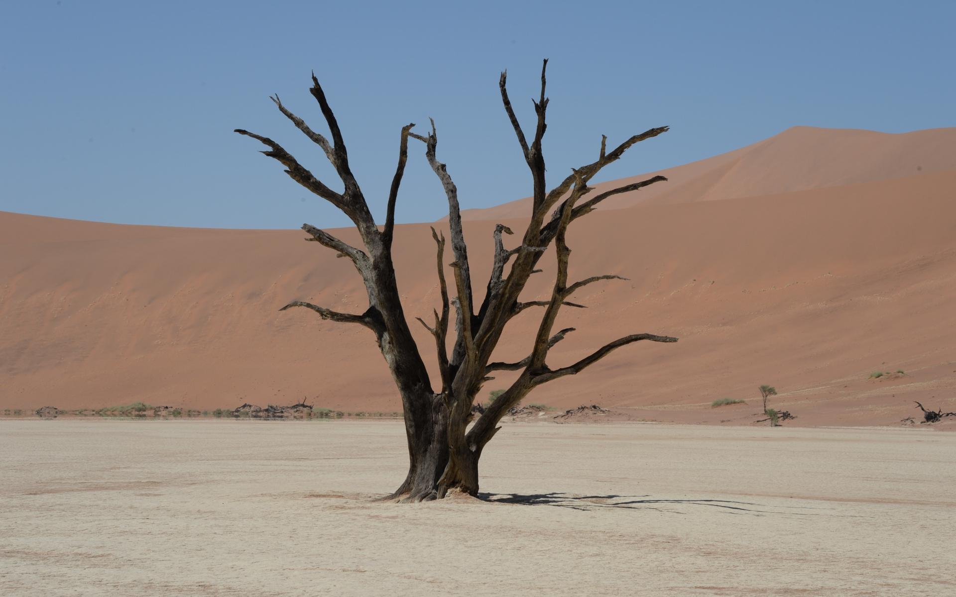 Namibia_Sossusvlei_Deadvlei_24