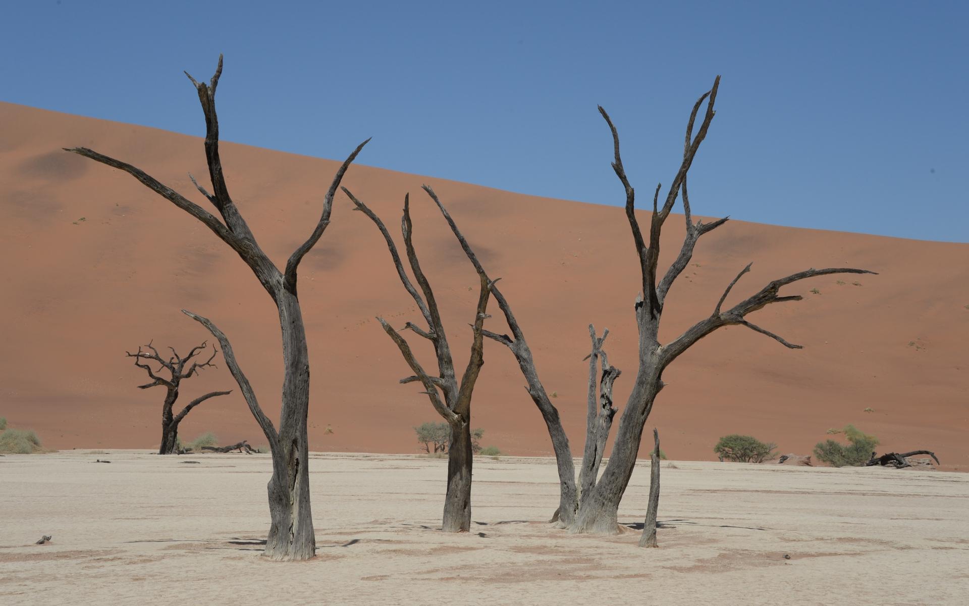 Namibia_Sossusvlei_Deadvlei_25