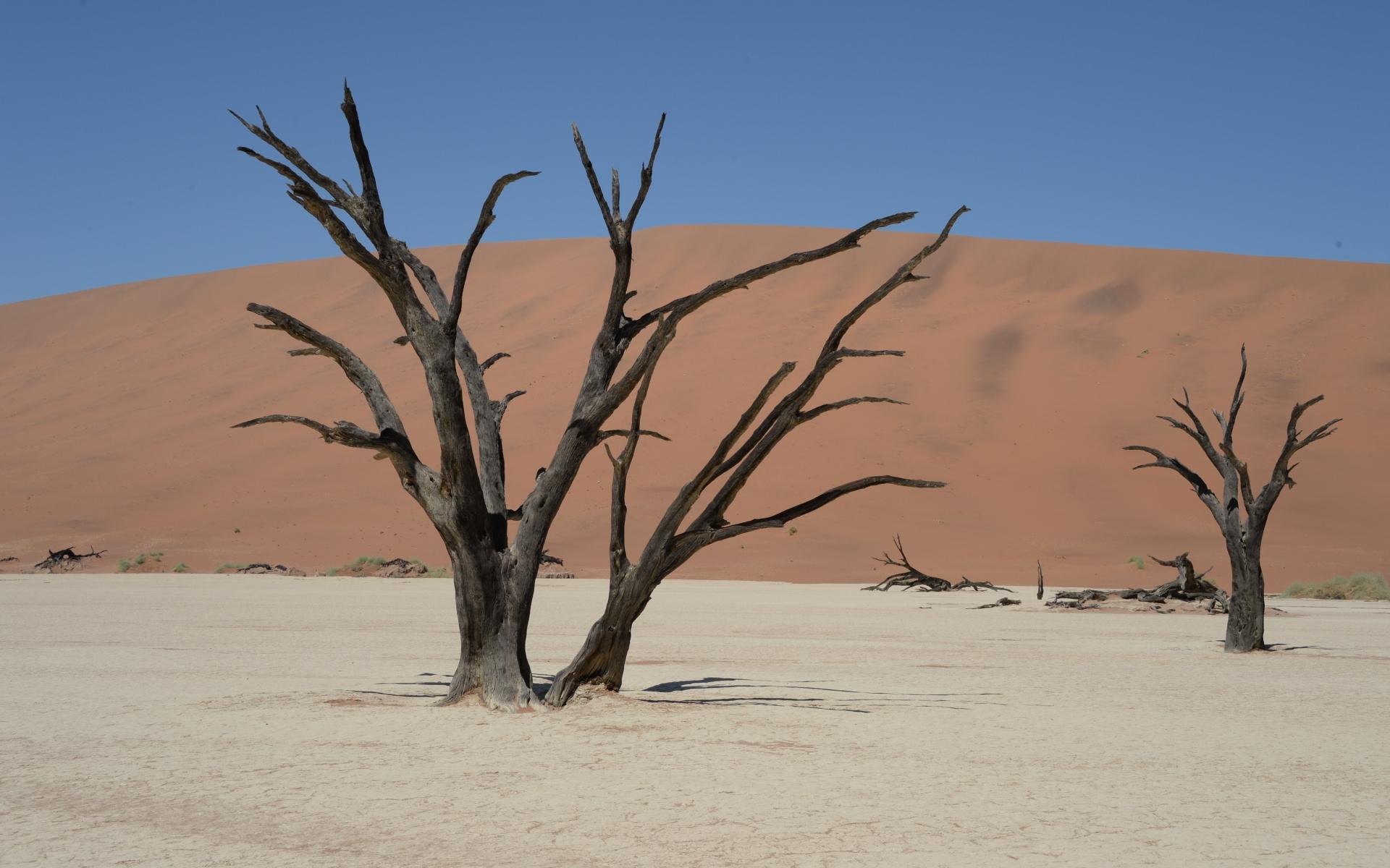 Namibia_Sossusvlei_Deadvlei_26