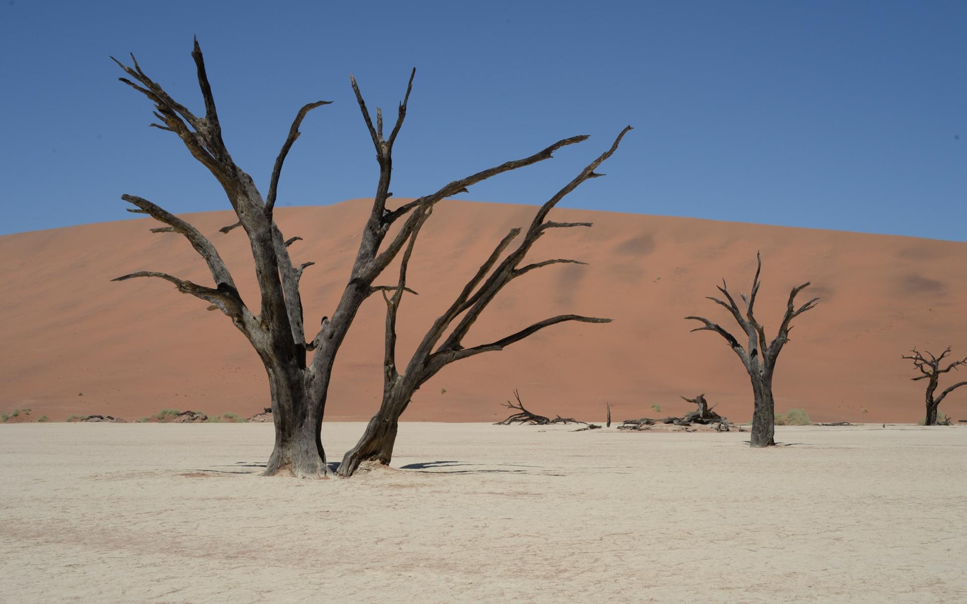Namibia_Sossusvlei_Deadvlei_27
