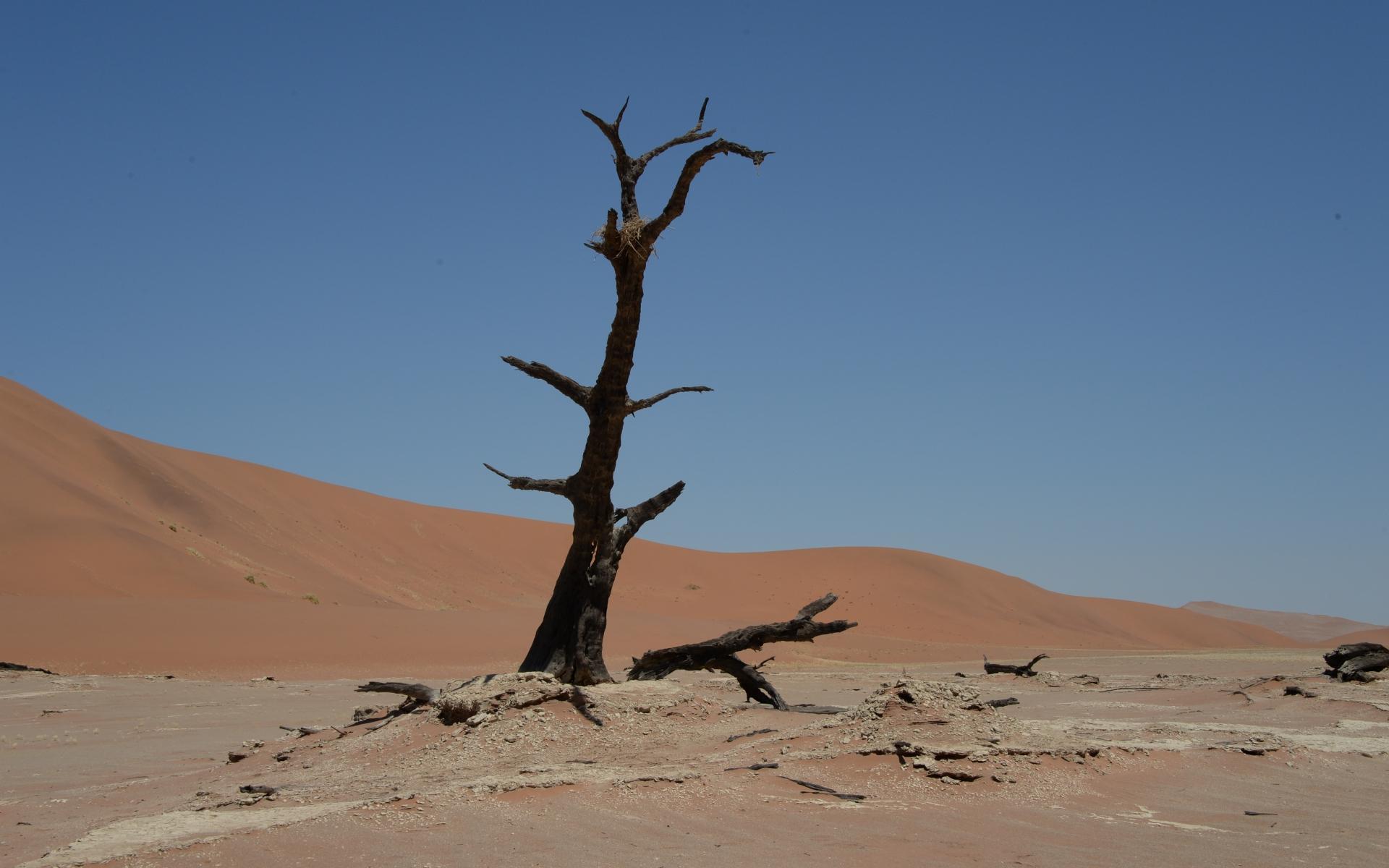 Namibia_Sossusvlei_Deadvlei_30