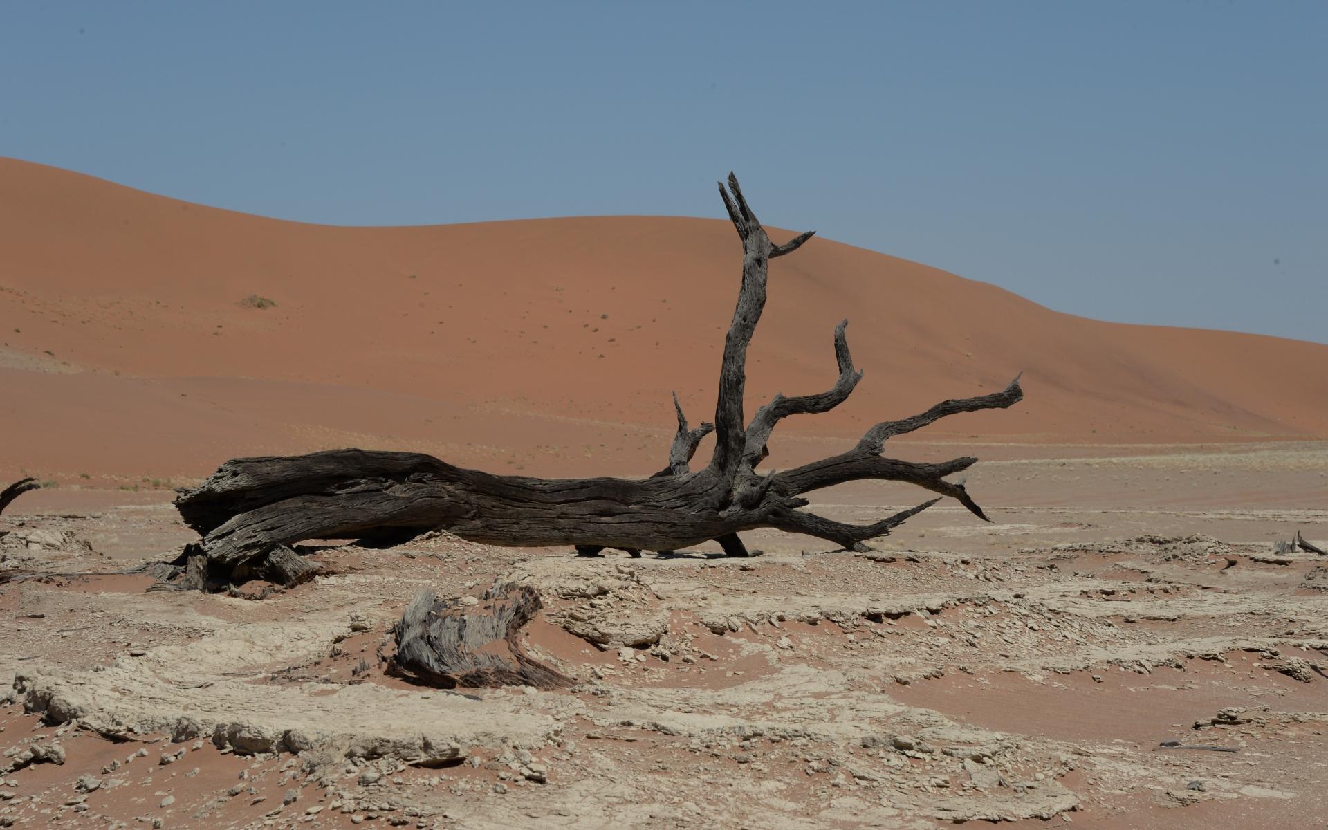 Namibia_Sossusvlei_Deadvlei_31