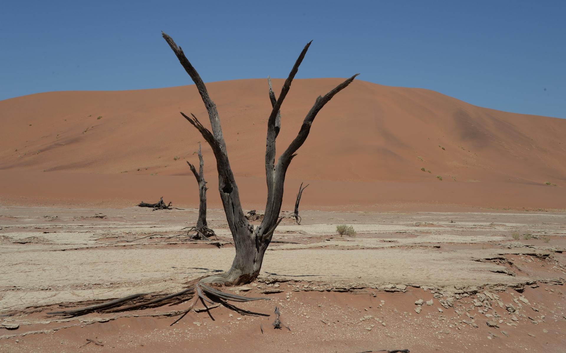 Namibia_Sossusvlei_Deadvlei_32