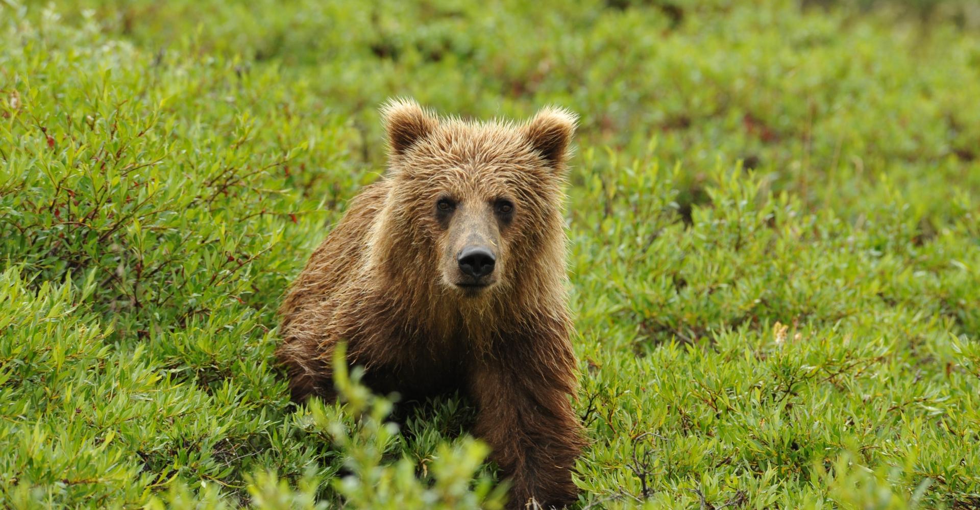 Wildnisabenteuer_Alaska_Titel_2